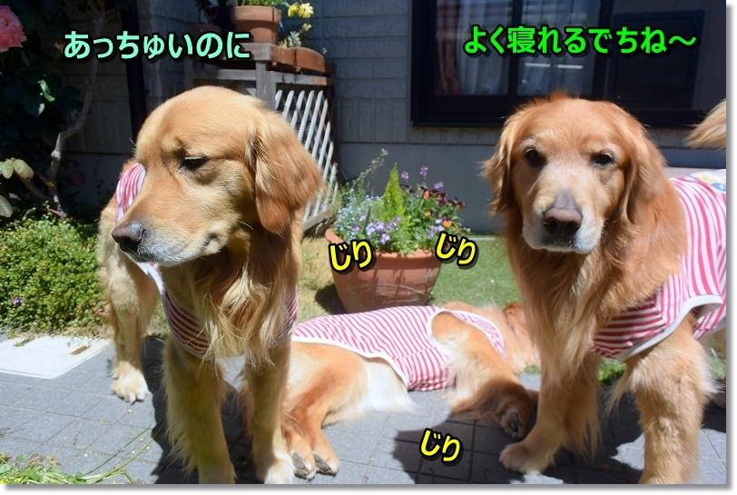 DSC_6574_20190620115747406.jpg