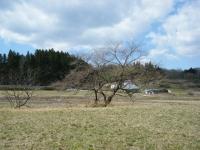 2019-04-06重箱石05