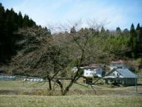 2019-04-08重箱石04