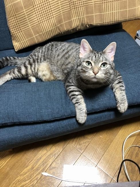 natsuki02.jpg