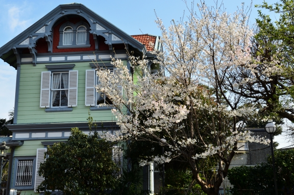 山手の桜8