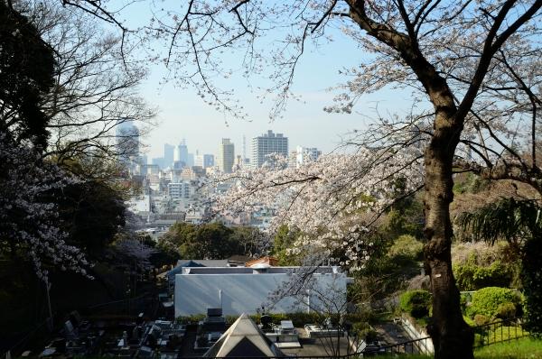 山手の桜9