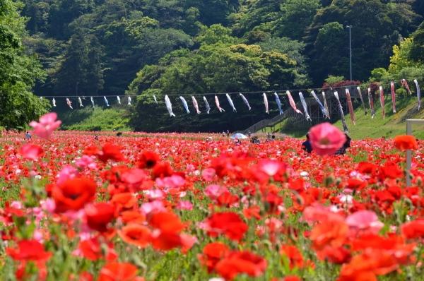 くりはま花の国7