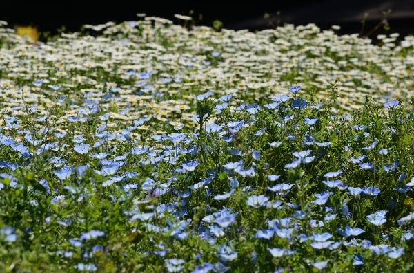 くりはま花の国3