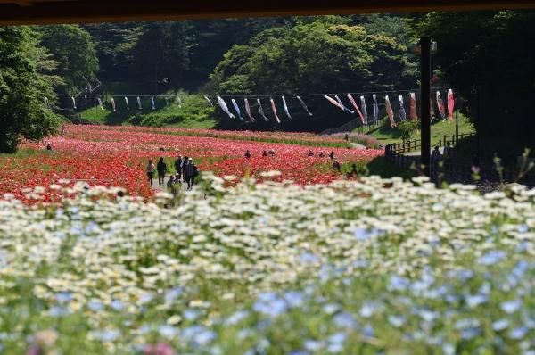 くりはま花の国2
