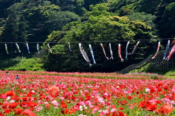 くりはま花の国9