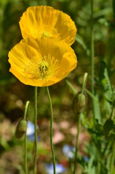 くりはま花の国6