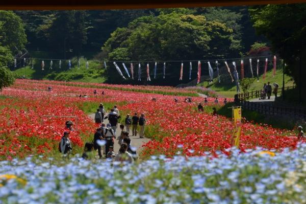 くりはま花の国11