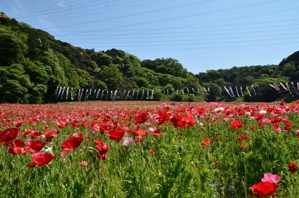 くりはま花の国10