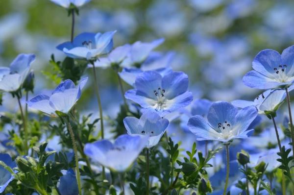 くりはま花の国16
