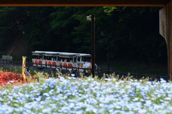 くりはま花の国15