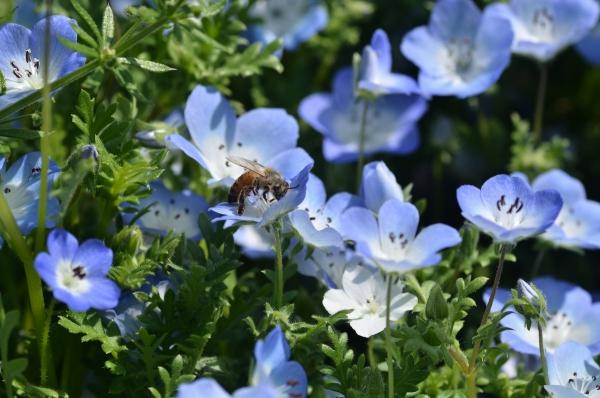 くりはま花の国18
