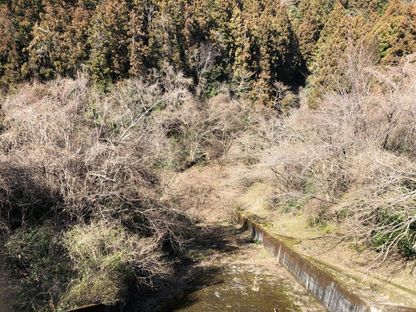 草戸山とりこぼし81