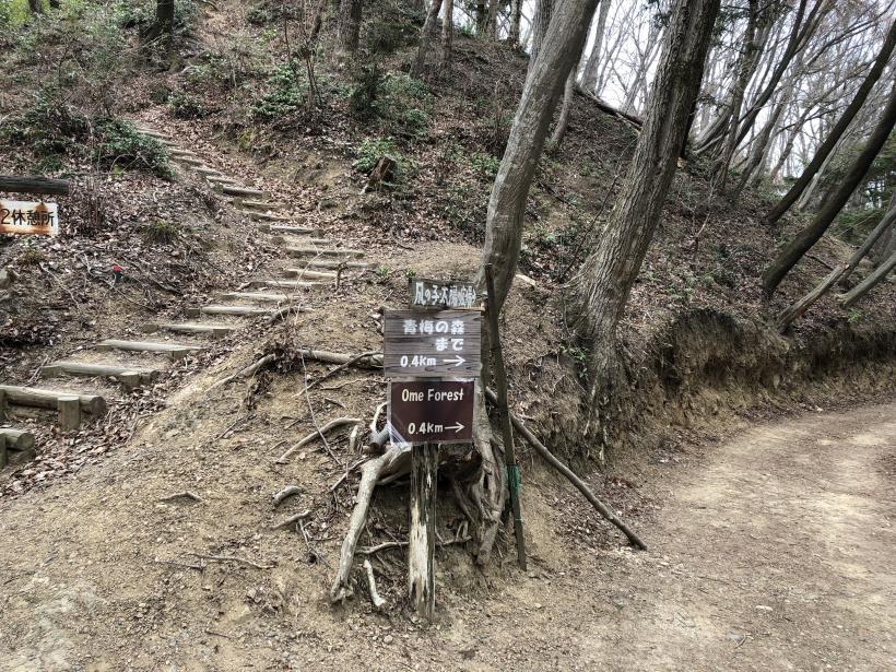 青梅丘陵栗平23