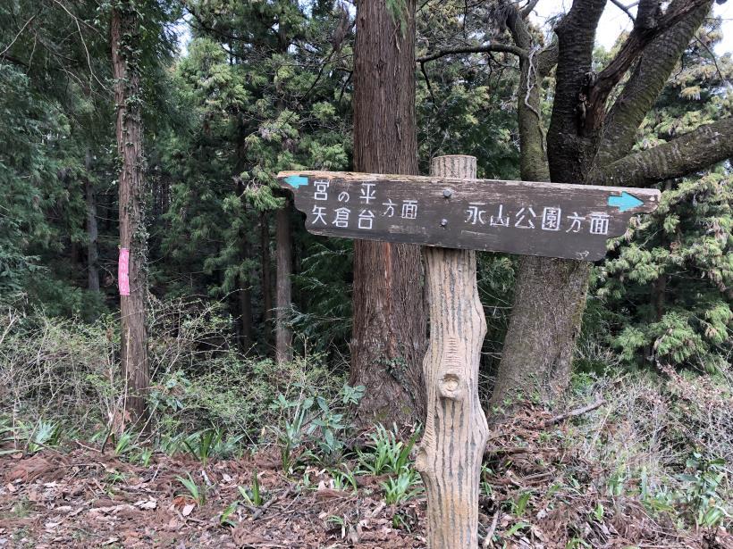 青梅丘陵栗平50