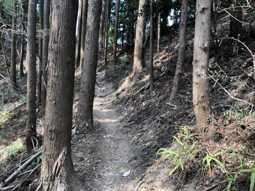 青梅丘陵栗平133