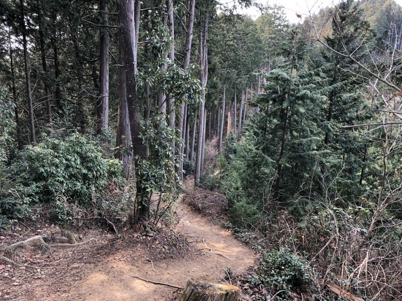 青梅丘陵栗平140