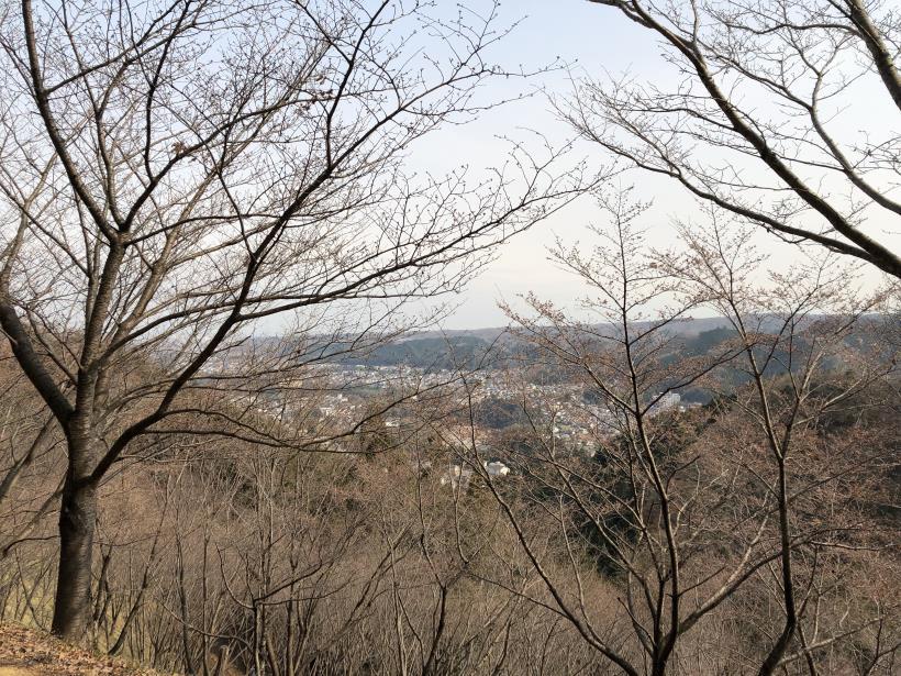 青梅丘陵栗平145