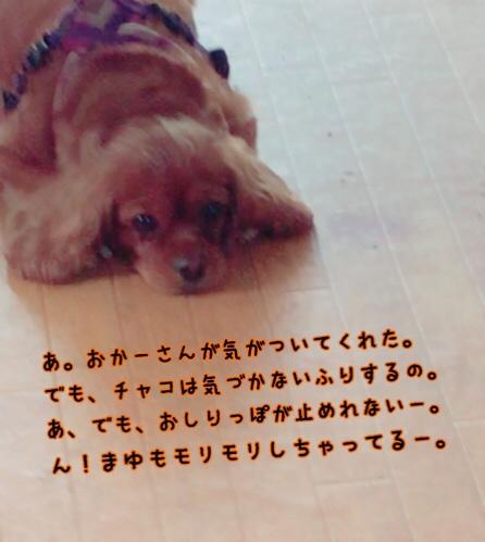 fc2blog_201906191557239be.jpg