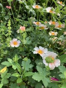 5月の花2