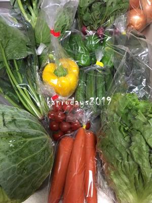20190615_野菜祭り