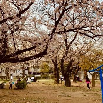 2019 桜 お花見 平成最後