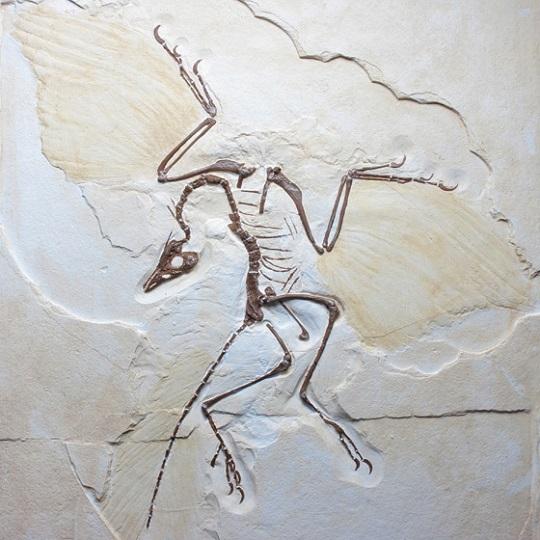 Archaeopteryxreplica026-1.jpg