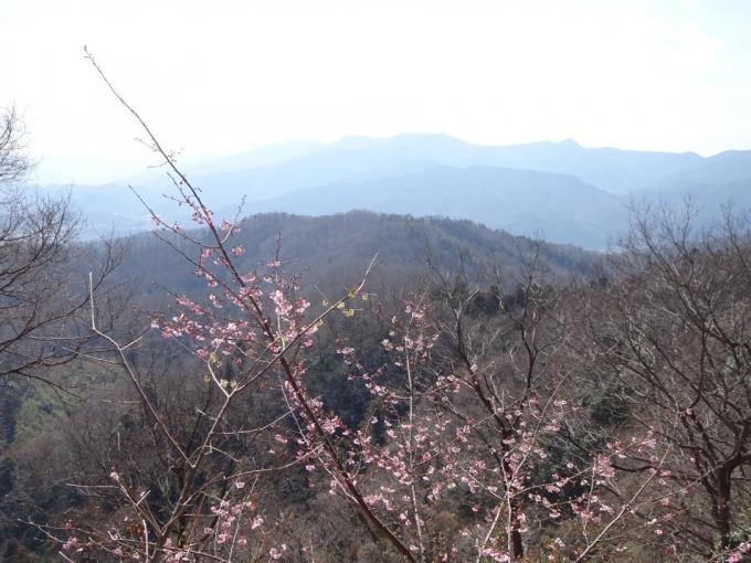 河津桜と大霧山らしい