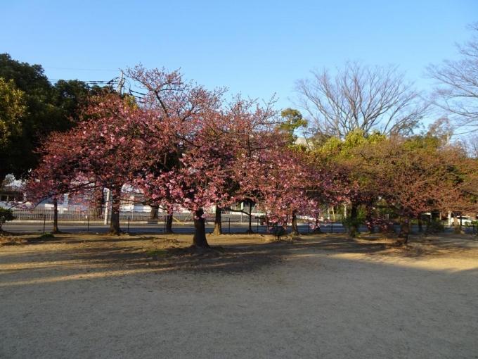 市之坪公園