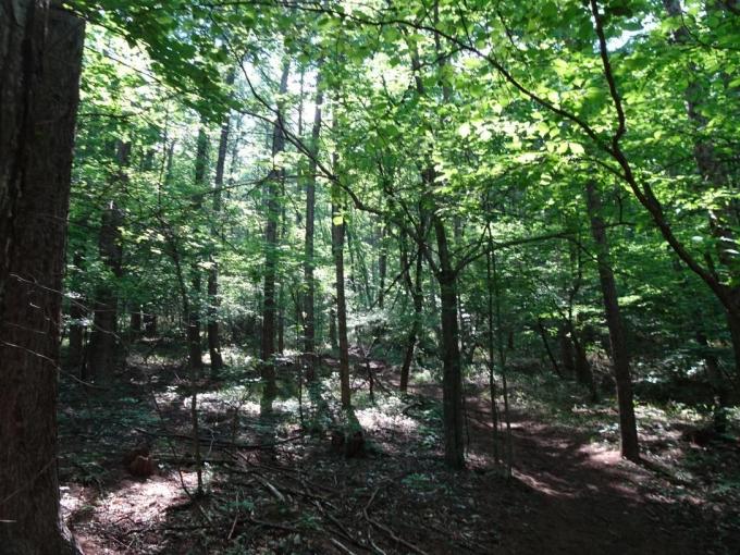 登山口付近の森