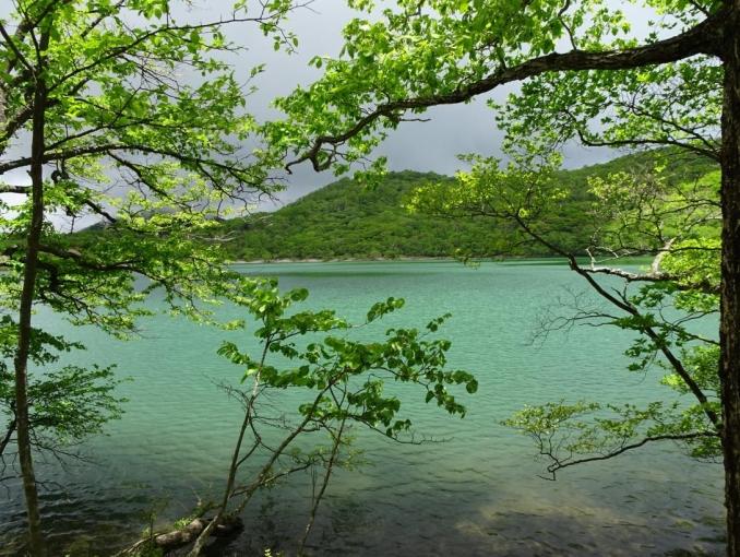 小沼、グリーンな水面