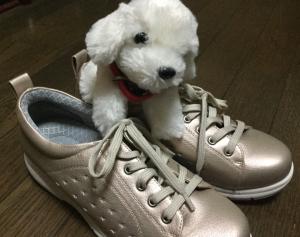 靴しまむら