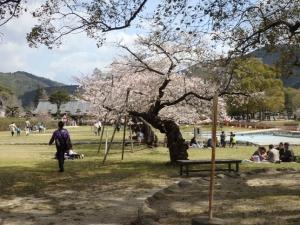 吉香公園4