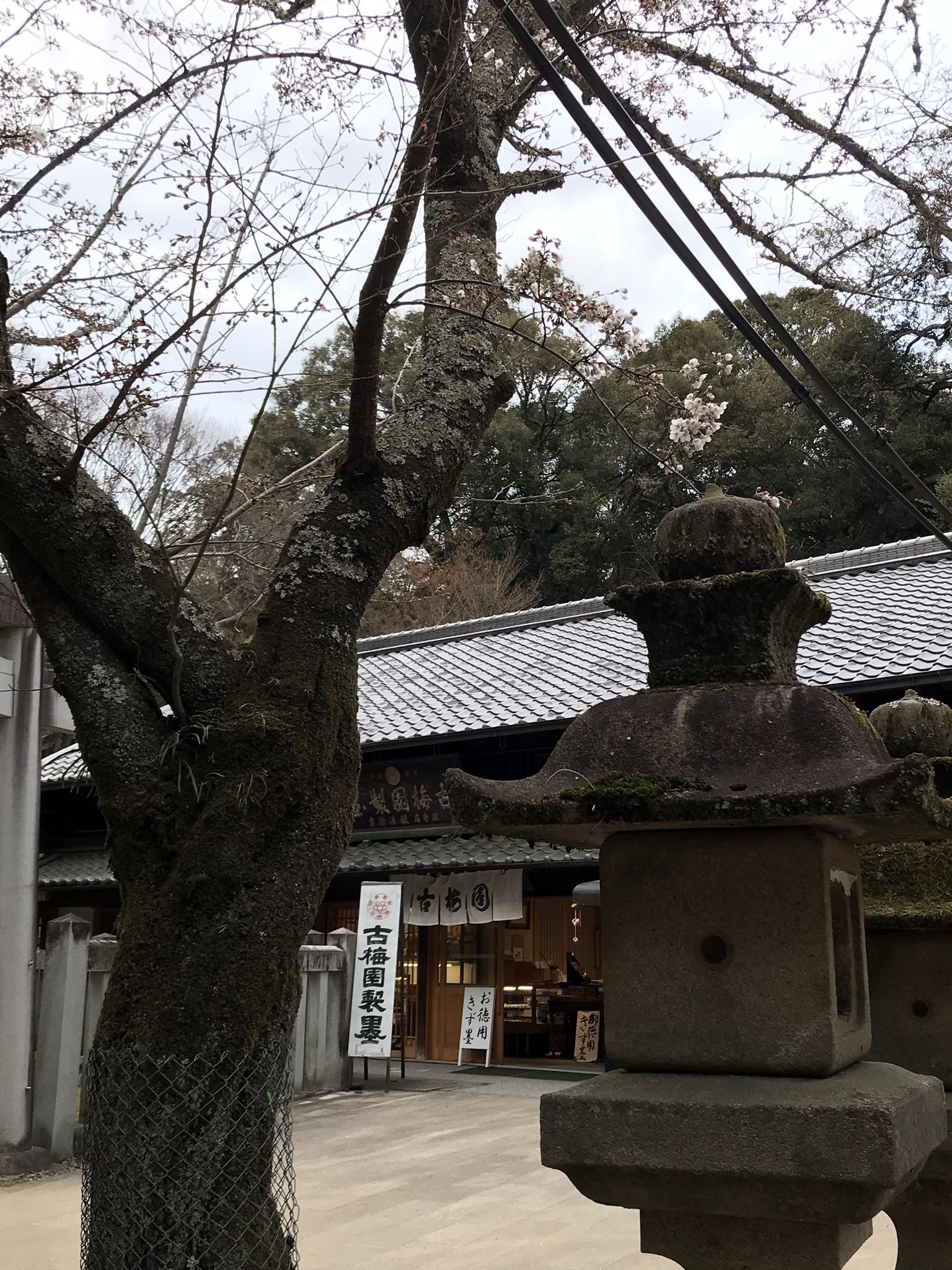 2019sakura04.jpg