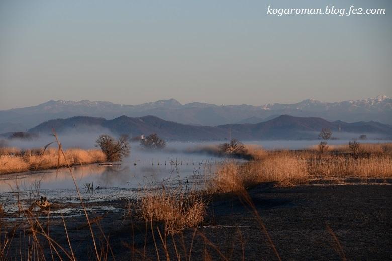 渡良瀬遊水地の早朝