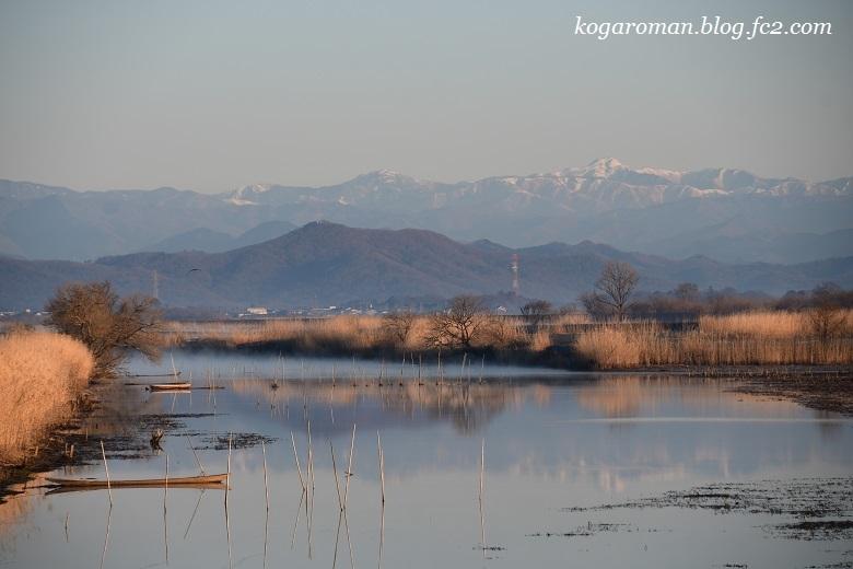 渡良瀬遊水地の早朝2