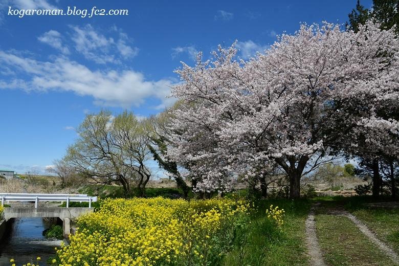 古河総合公園の花桃と桜7