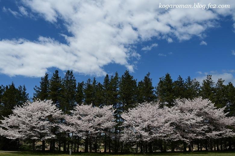 古河総合公園の花桃と桜9