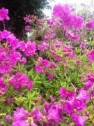 こがしファームの花 春