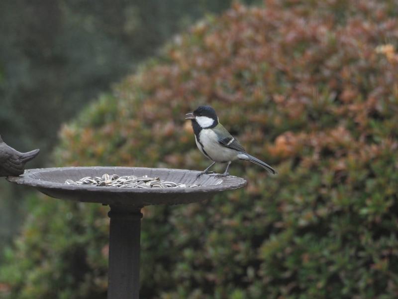 庭の小鳥31日①