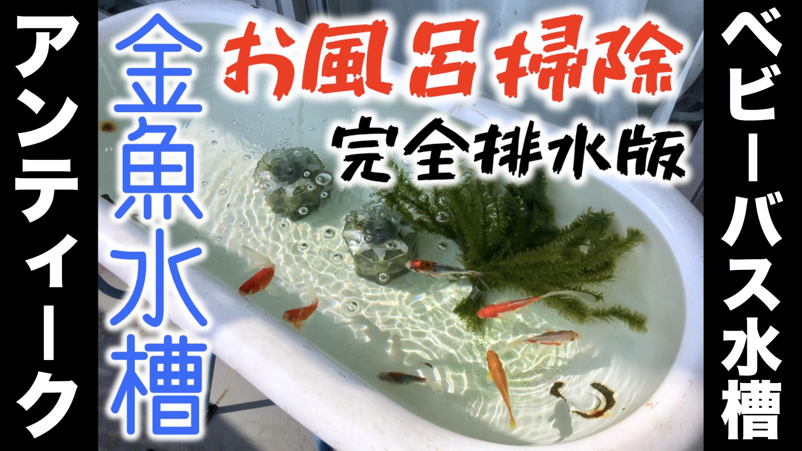 動くこじか、ベランダ金魚水槽の水ぜんぶ抜く大作戦!