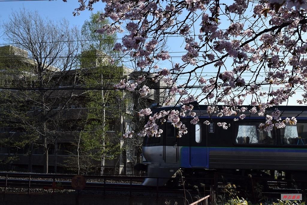 1001M すずらん1号と桜