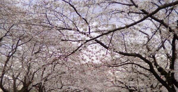 花ブ20190402-12