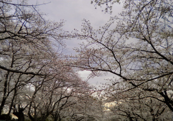 花ブ20190402-14