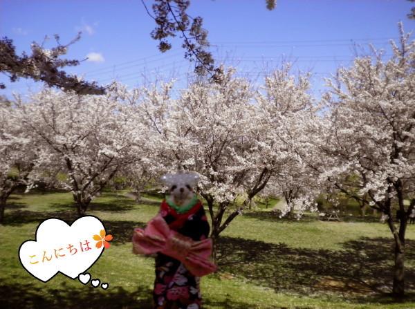 花ブ20190409-112