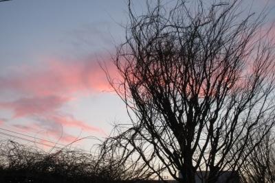 3月の夕陽と樹影