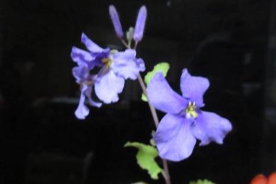 山本さん宅の生け花