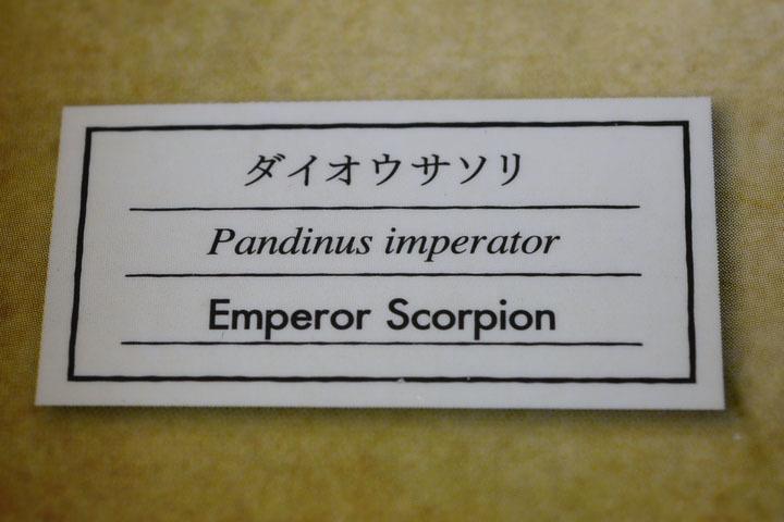 EmperorScorpion004.jpg