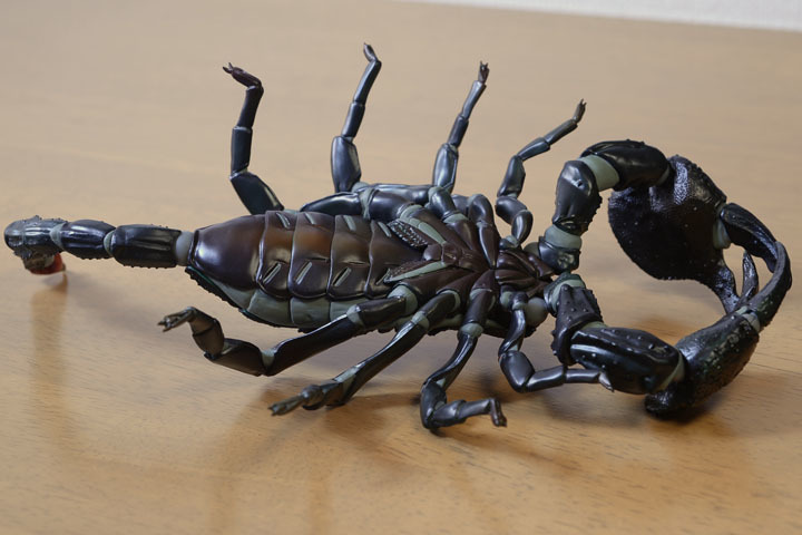 EmperorScorpion010.jpg