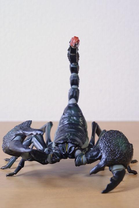 EmperorScorpion011.jpg